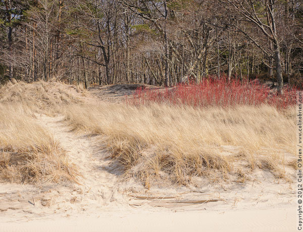 where dunes disappear into woodlands