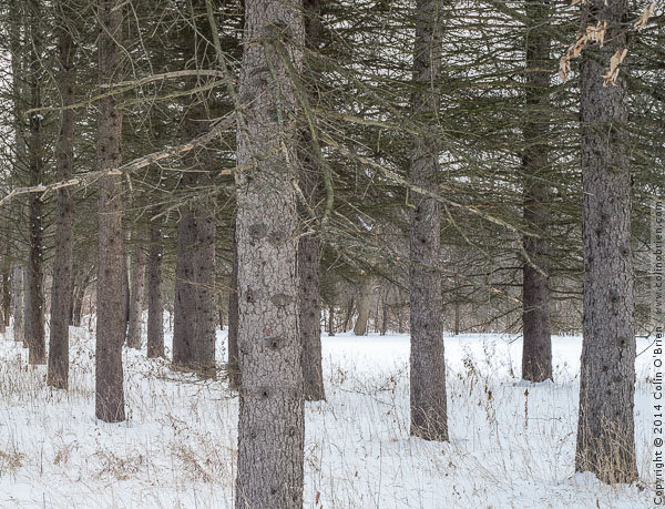 Photo of Close up of trees by Barton Shore Drive