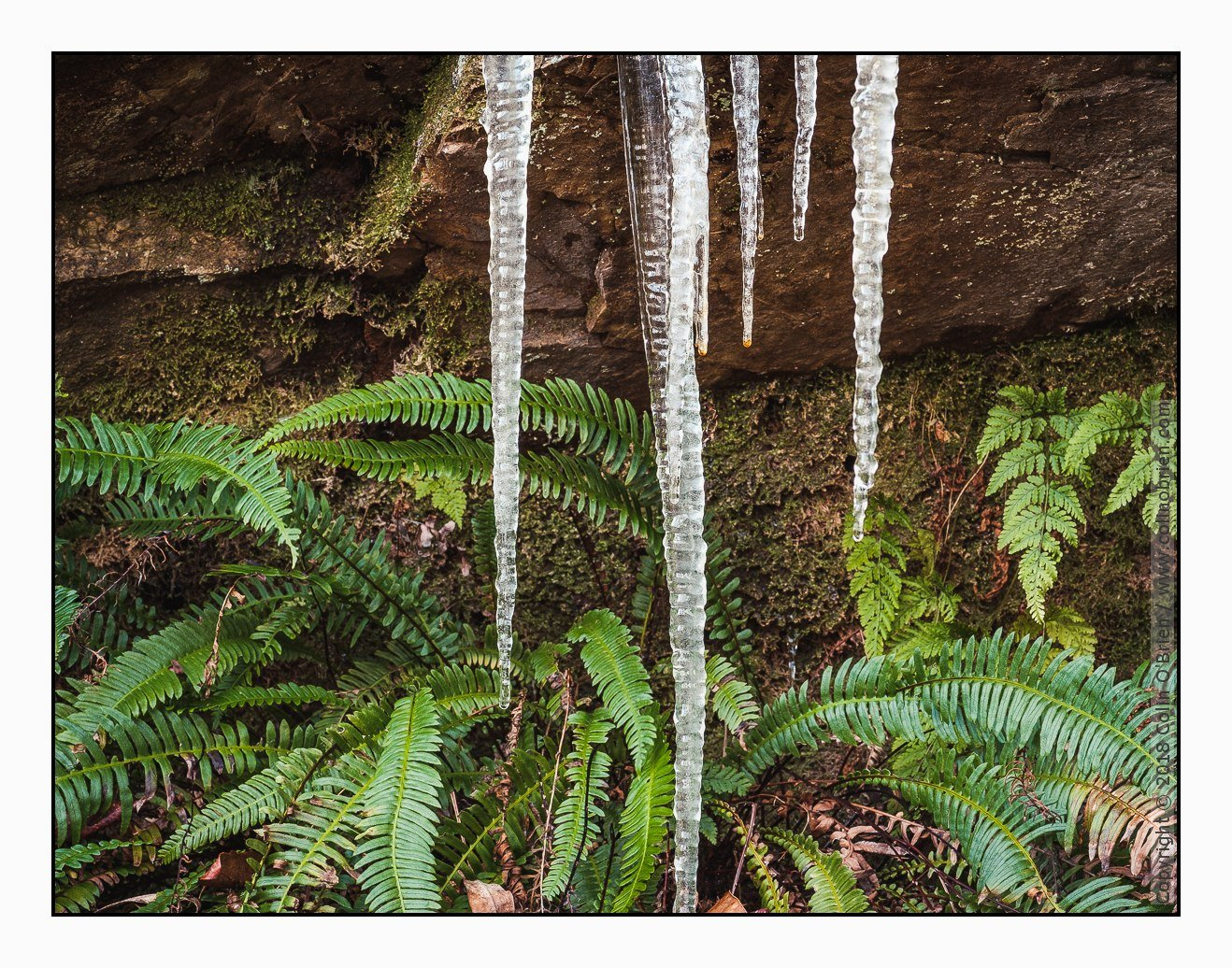 Fern icicles